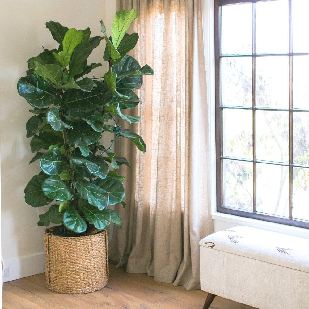 Jodi G Designs Santa Barbra Interior Designer | Spring Interior Design Trends