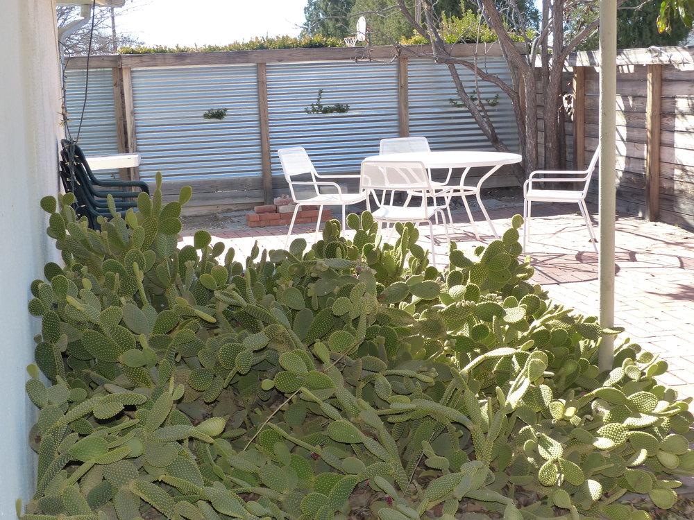 Outdoortablecactus.jpg