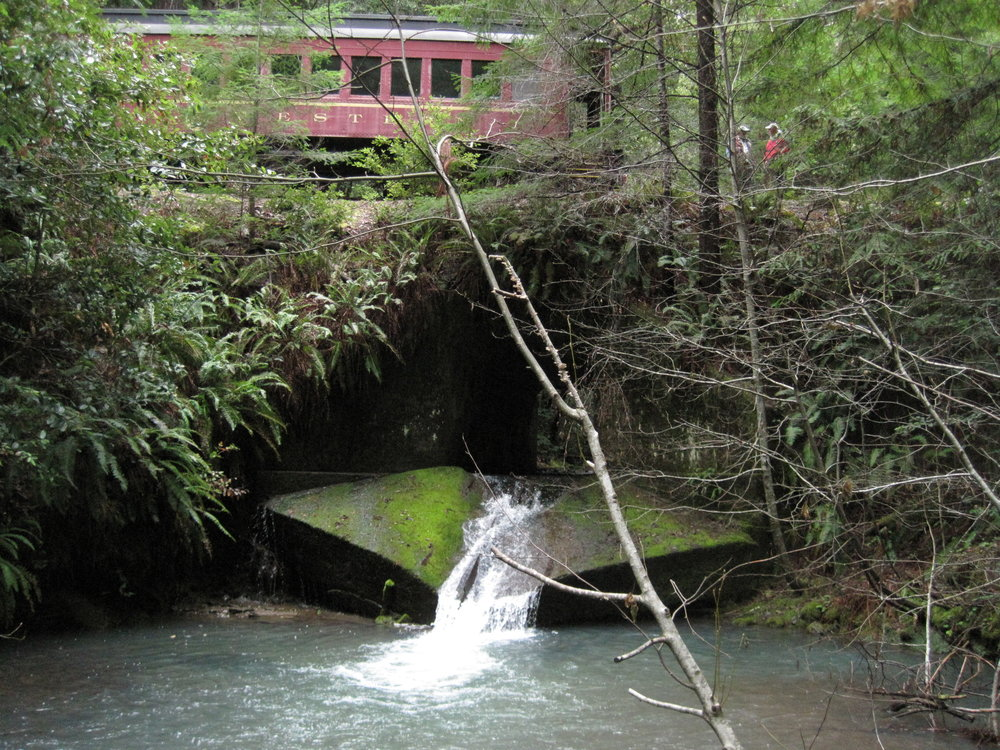 WE NEED YOUR HELP - Help us support efforts to improve fish passage and reduce sediment delivery along the Skunk Train's Mendocino Railway.