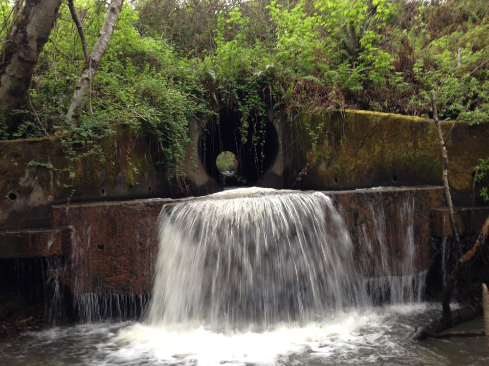 Trout Unlimited is actively trying to secure funding for a Fish Passage Feasibility Study and Design Project for Essex Gulch, a tributary to the Mad River in Humboldt County.