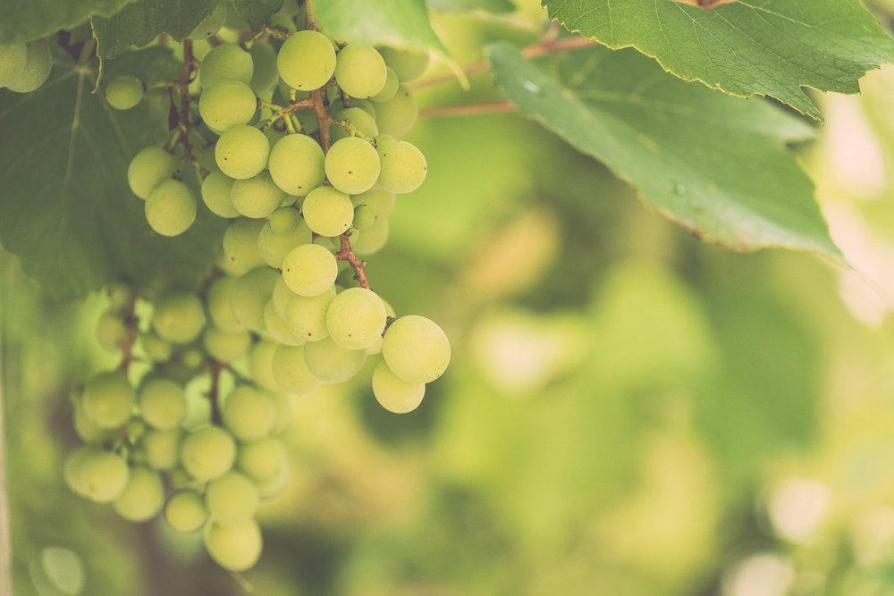 Spargel trifft Wein - Freitag, 17. Mai 2019begrüssen wir Herrn Silvano Costa von der Getränke-Quelle Chur, welcher Sie in die verschiedenen Kombinationsmöglichkeiten von Spargel und Weisswein einweit.Melden Sie sich hier gleich an; wir freuen uns auf einen spannenden Abend.