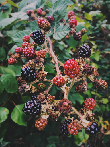 Blackberries - Don't be afraid to throw in berries that are a little dried out and wrinkly; they'll be extra sweet from summer. Try pairing them with cardamom or allspice in the cake, and use a touch of cloves (just a little) with cinnamon in your crumb mixture.