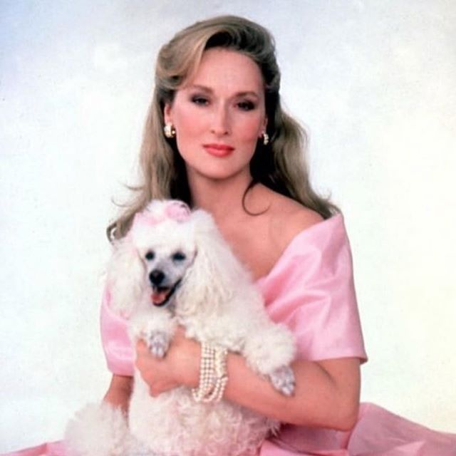 💖Channeling our inner Meryl for 2019. - Hope everyone had a nice break! We are already getting rentals lined up- so so excited for this year. Next week is when we'll be announcing some changes! Ps. I am looking to partner with more brands and businesses on creating workshops, talks, and retail happy hour - who's interested? Let's chat! Email us!