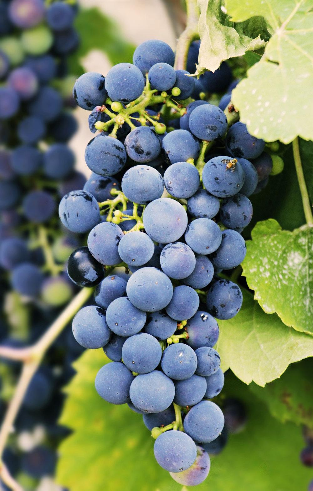 cypress mill_wine