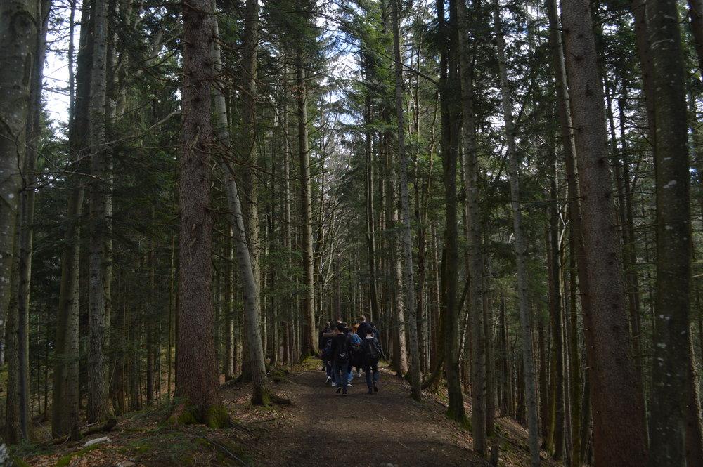 Orientation Hike