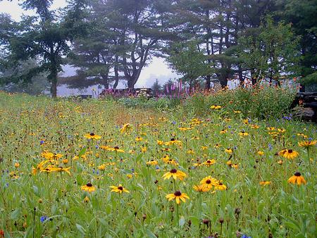 wildflower-meadow-gardens-stonewall-landscape.jpg