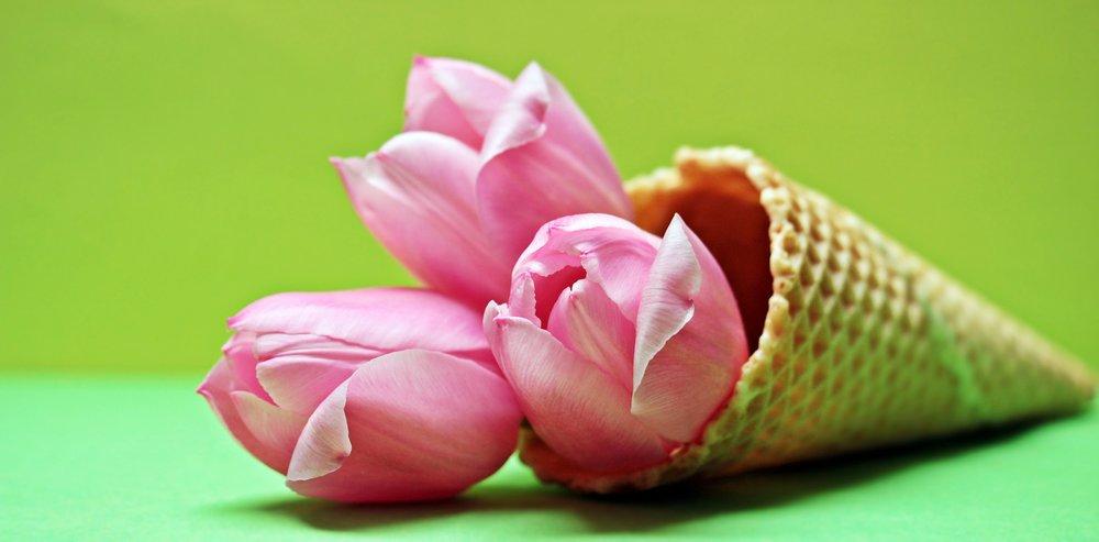 tulips-eb34b5072f.jpg