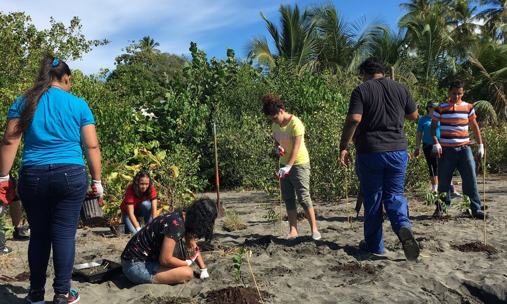 Seagrass Conservation and Coastal Vegetation Restoration Project in the Playa de Ponce - This project was financially supported by the National Fish and Wildlife Foundation in their continuous efforts to protect seagrass, a critical habitat for commercially important marine species and federally protected marine fauna. Various areas in the coastal and tidal region of the Playa de Ponce were identified and modified with native coastal plant species. In total, over 1,000 individual trees, shrubs, and herbaceous plants were transplanted.