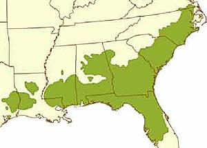 Range of Longleaf Pine Trees in the Southeastern U.S.