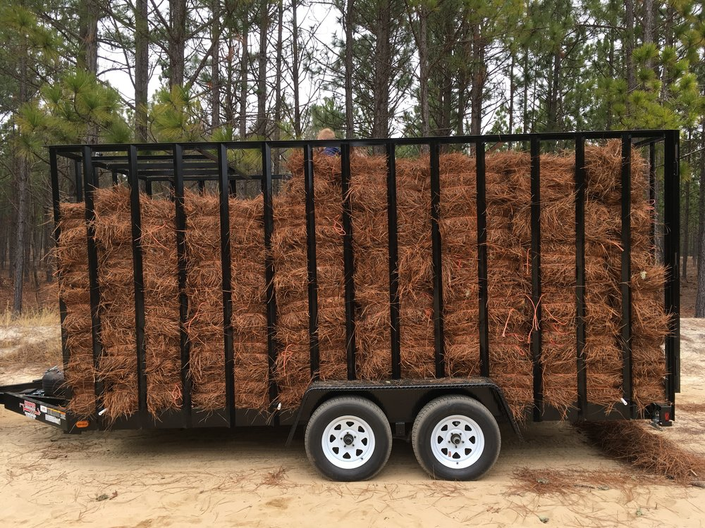 Our custom built 7'x16'x7' Pine Straw Trailer picking up our first load in the Sandhills of South Carolina.