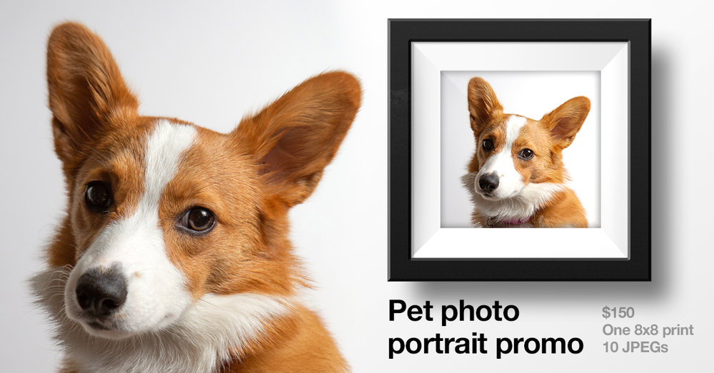 Pet Photo Portrait Promo