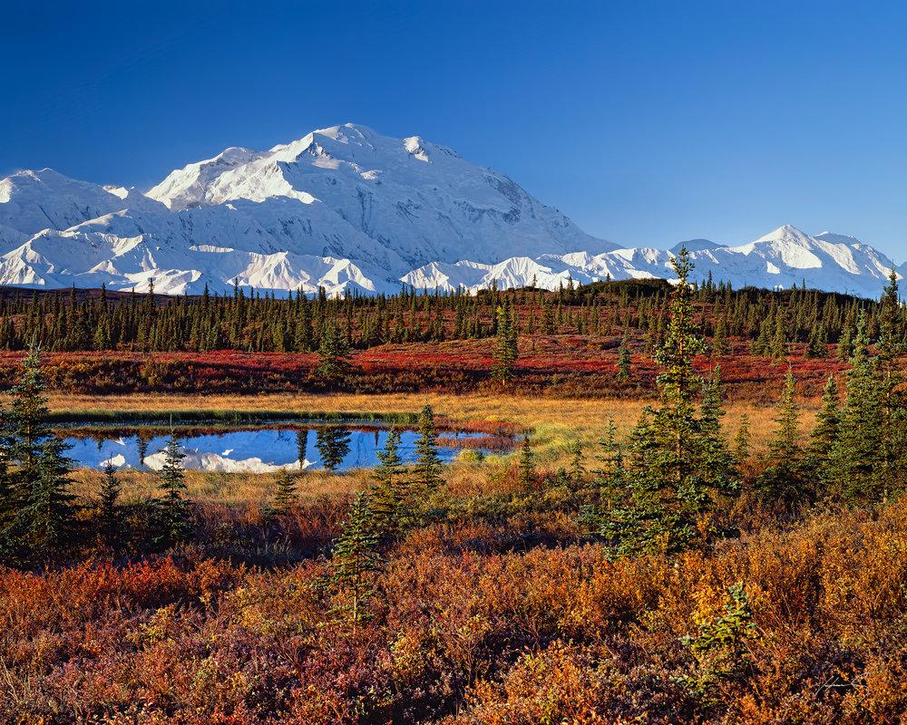 """""""Denali Morning"""" Denali N.P., Alaska"""