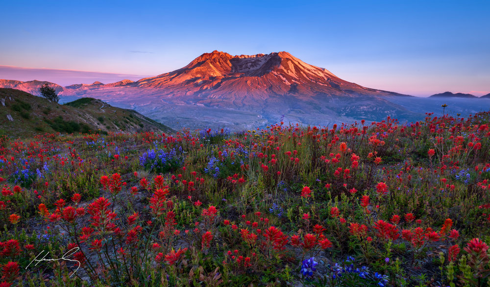 """Spring Glory""Mt. St. Helen's, Washington"