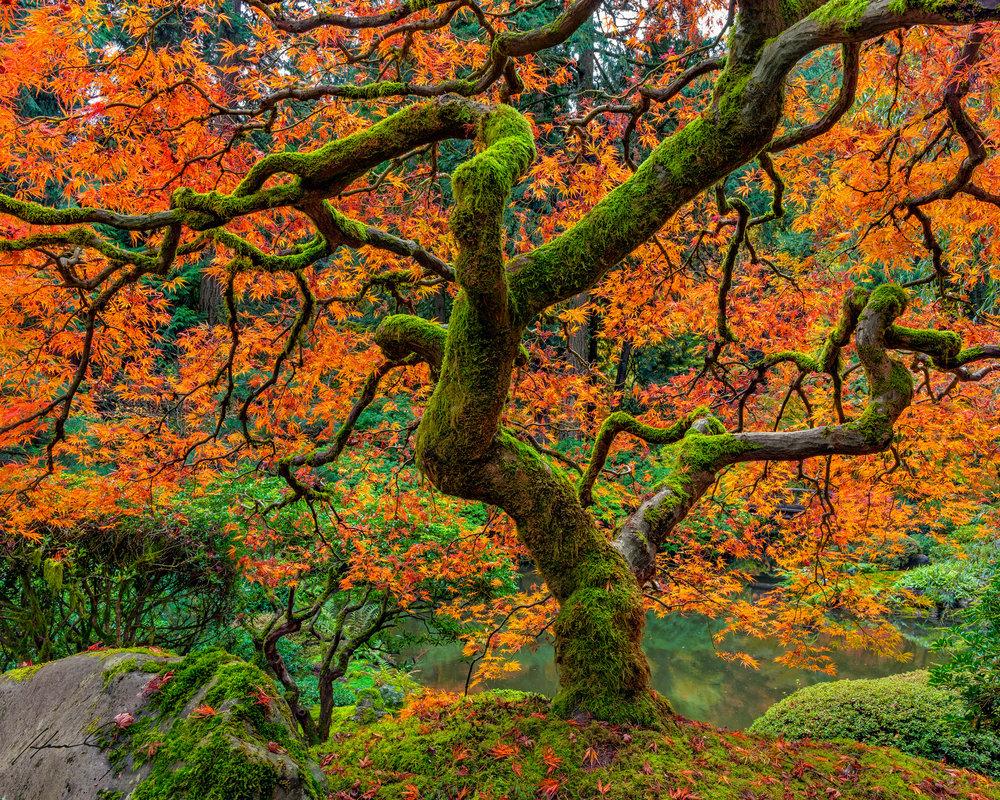 """""""Wabi Sabi"""" Portland Japanese Garden, Oregon"""
