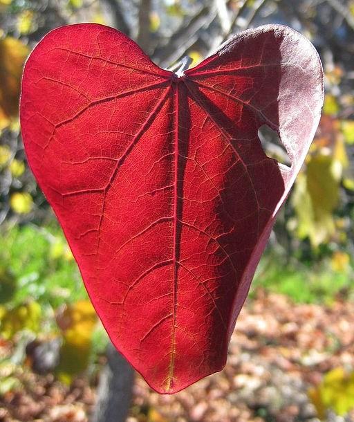 Nature Heart 1.jpg