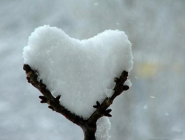 Nature Heart 4.jpg