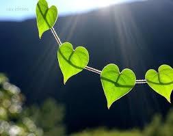 Nature Heart 7.jpeg