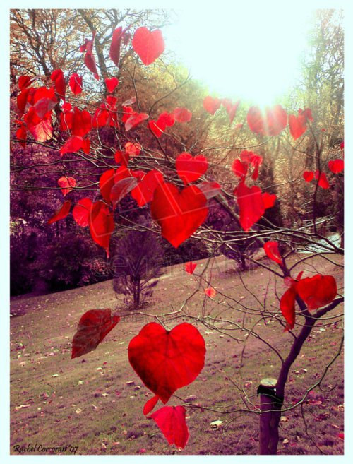 Nature Heart 8.jpg