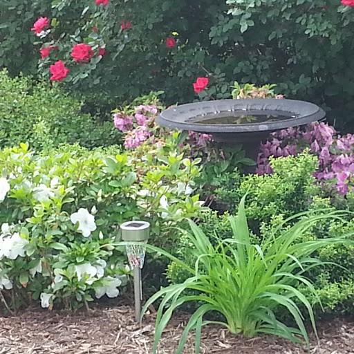 My backyard garden in the springtime. I love flowers!