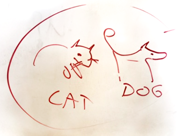 cat-dog.png