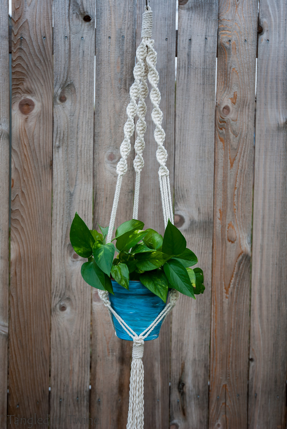 """Pictured: Single plant hanger approximately 40"""" long, holding a 6"""" pot. $35"""