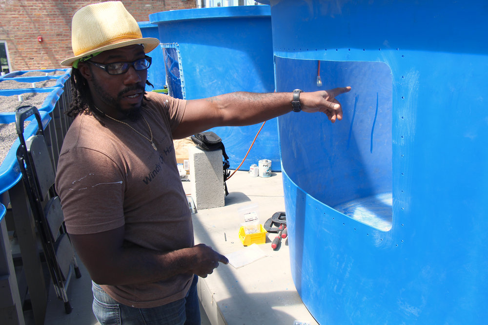 Dawvid Chayim helps prevent water leaks in the aquaponics system that hold tilapia.