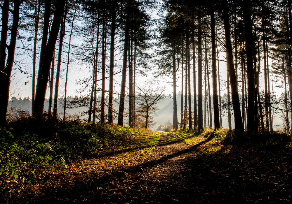 clumber-trees-21x30mm.jpeg