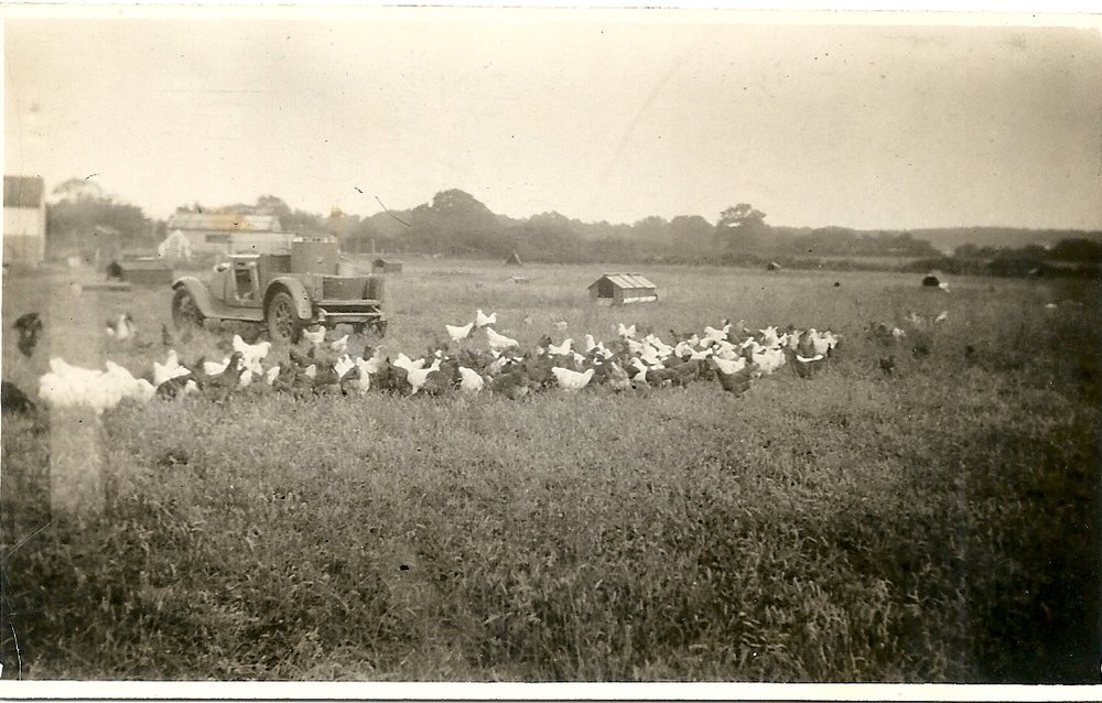 Joy family driving turkeys 1950s