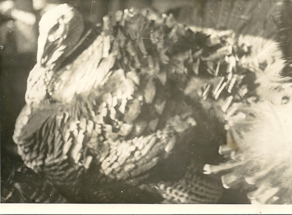 Bronze Turkey 1940s