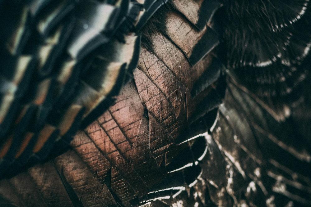 Bramble-farm-free-range-turkeys-surrey-005.jpg