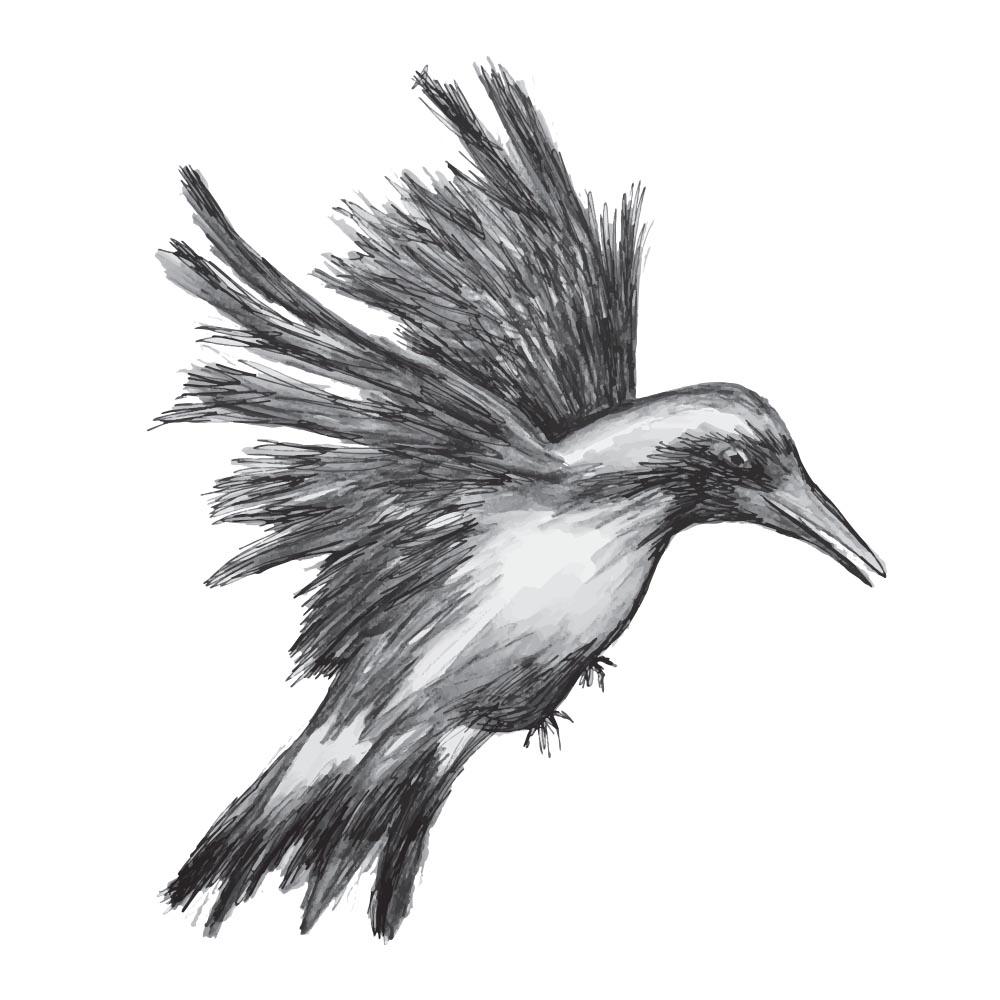 Raven by Rebecca Johnstone