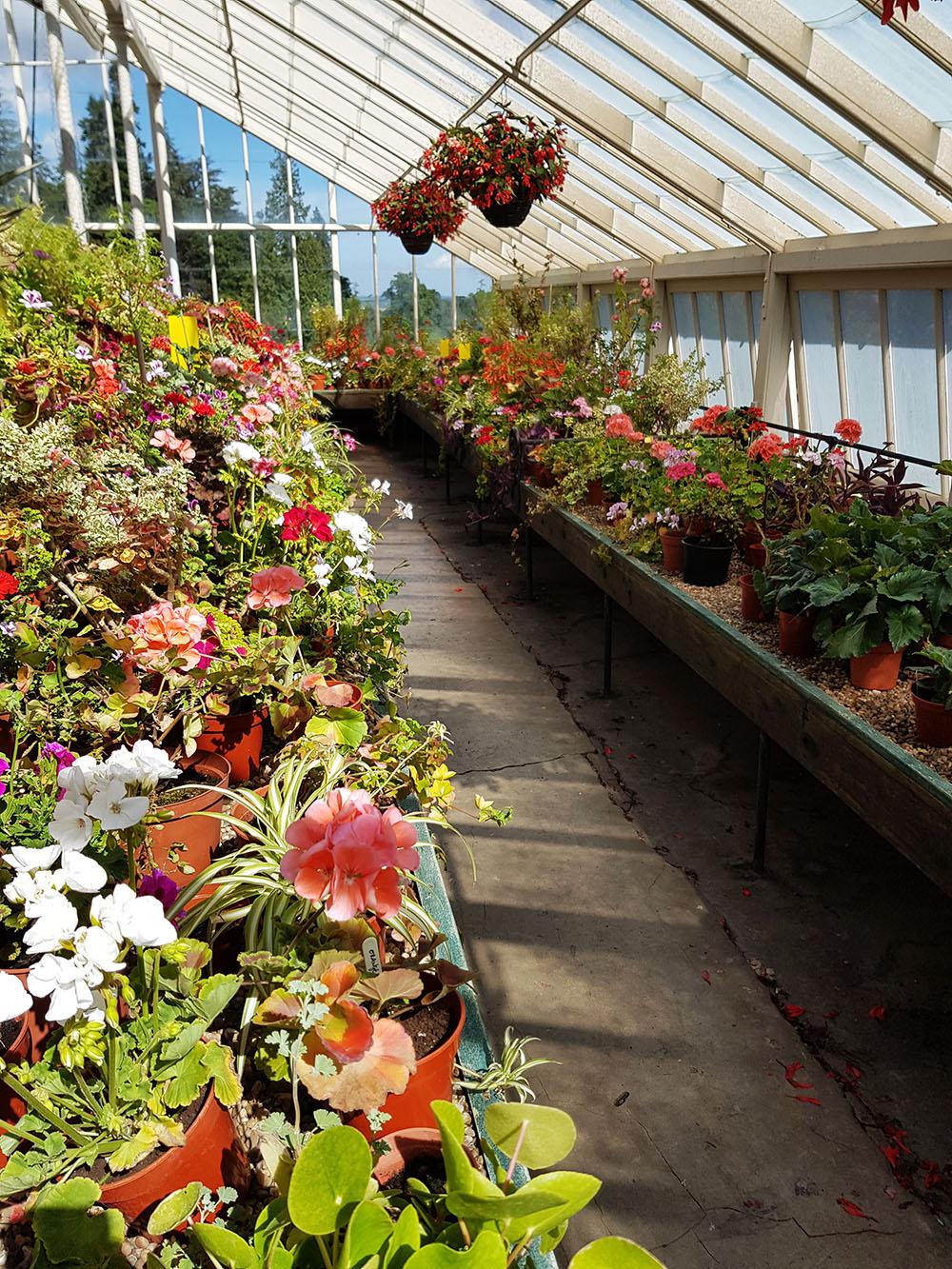 Drummond Gardens, Crieff, Rebecca Johnstone