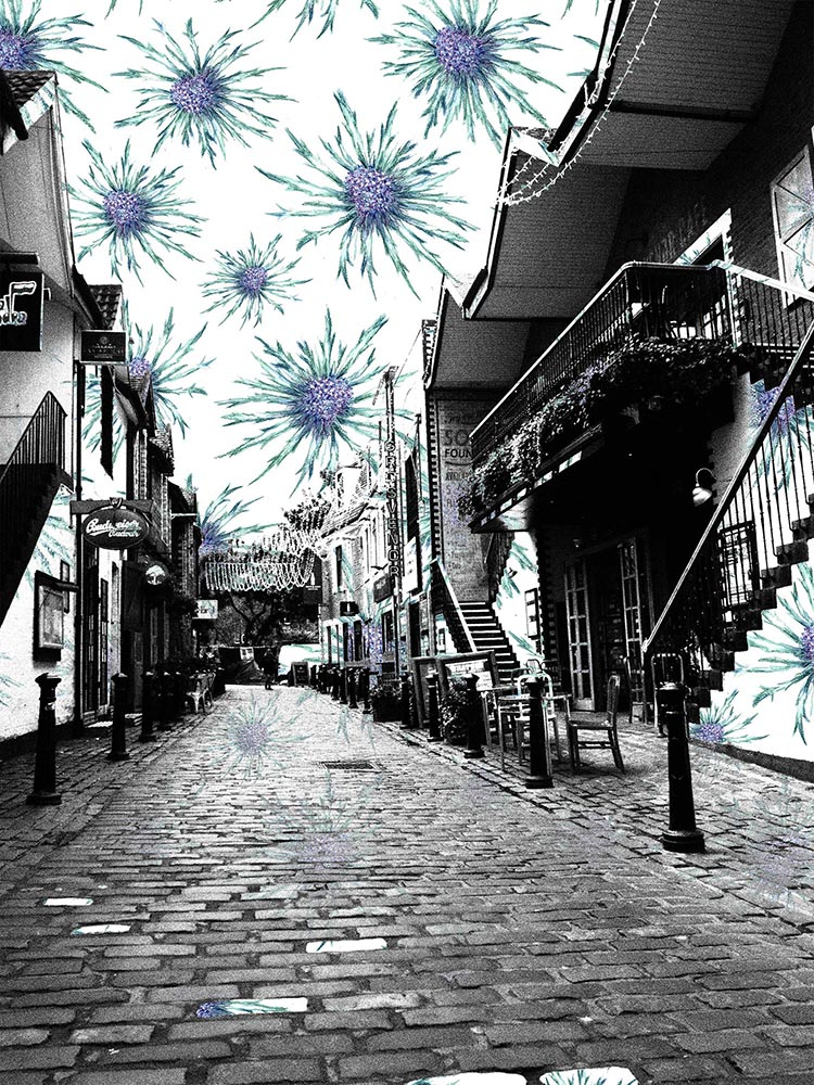 Ashton Lane Thistles Pattern-Bomb Photo Print + Postcard