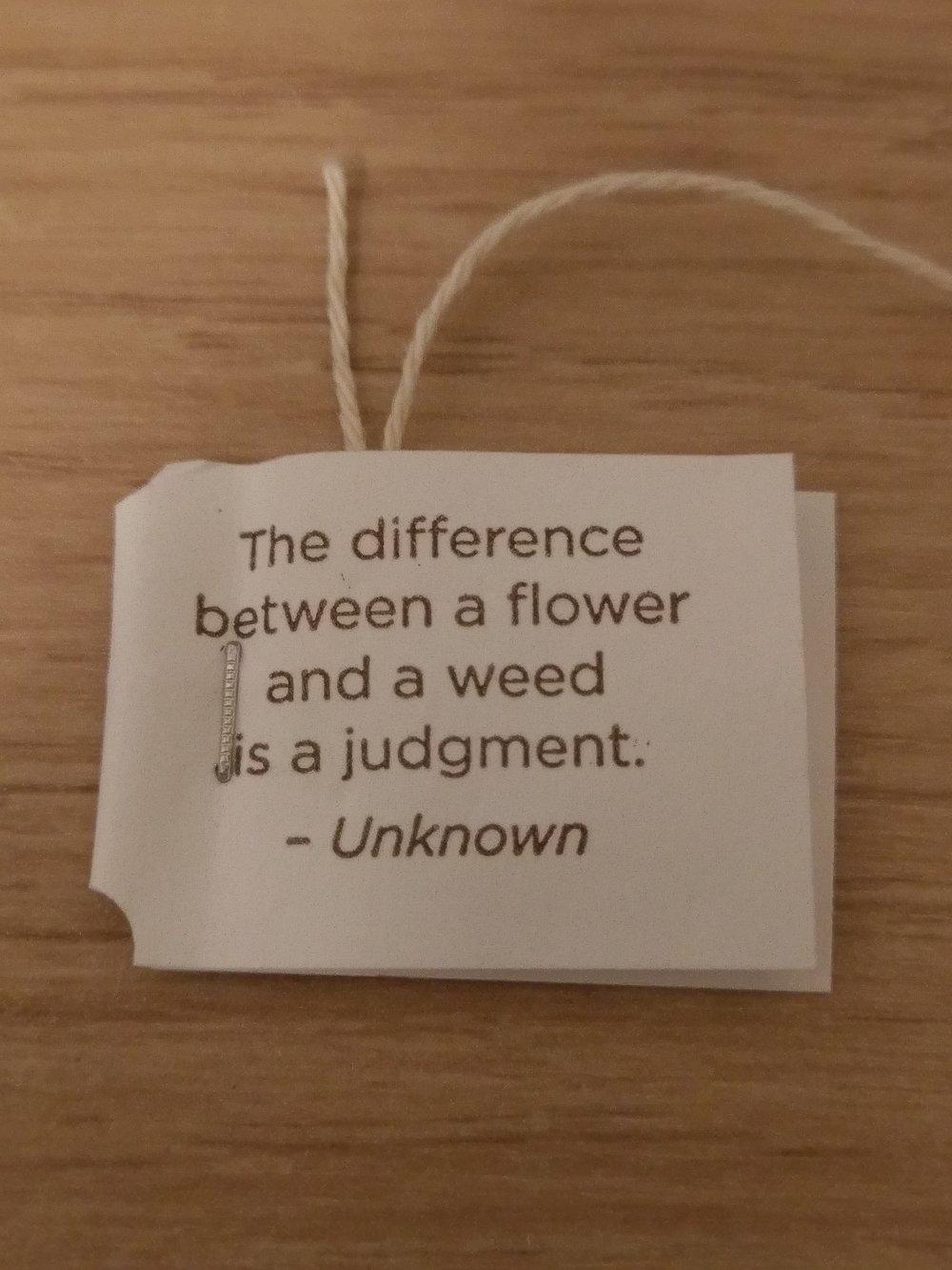 (or so says my tea bag...)