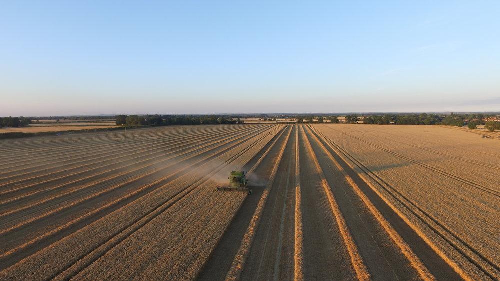 Harvest 2015 (6).JPG