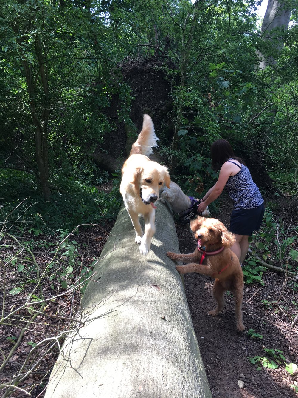 The gang exploring Swithland woods.