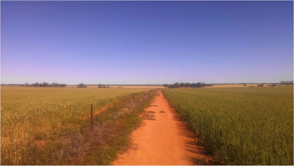 This pic is in a land in Australia that receives less than a cup of water a year. The left field is without regeneration practises. The right is with these. It is the soil that has been improved to hold the water. can you see the difference?