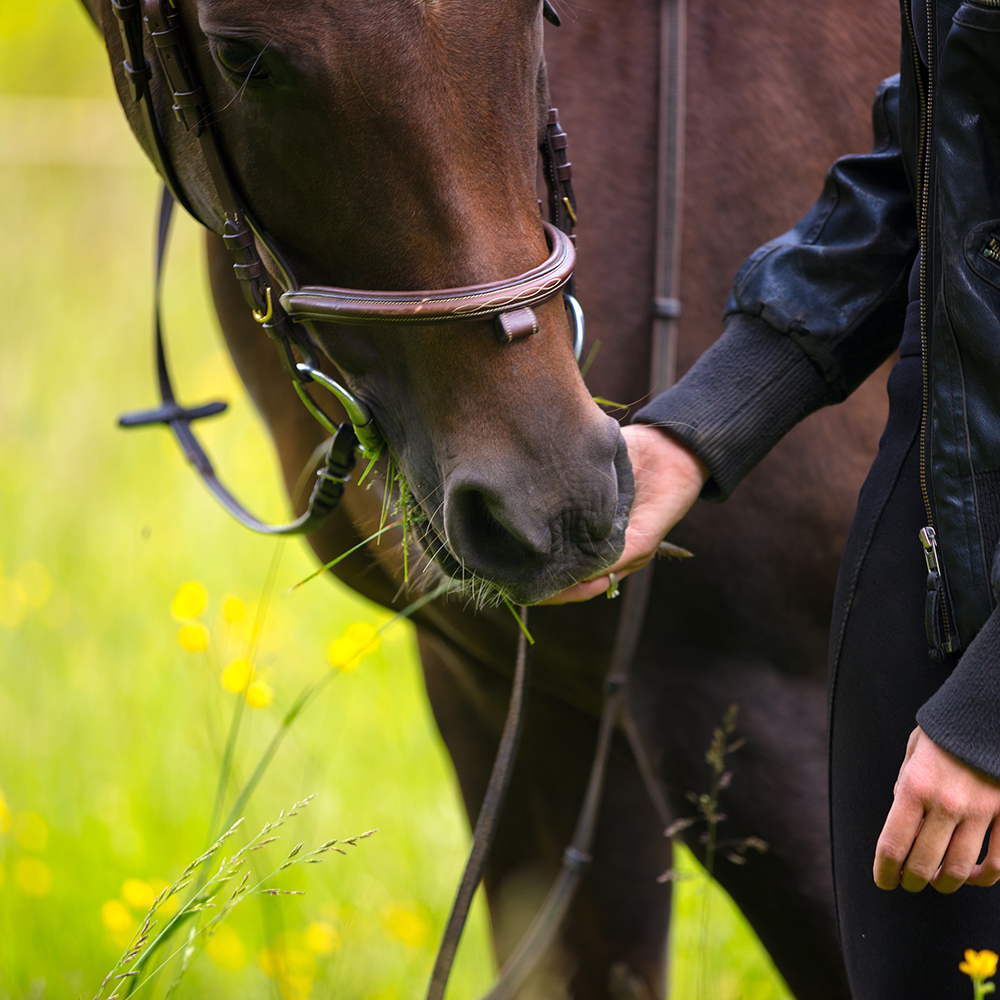 Feeding-Horse-Sincerus-Leadership.jpg