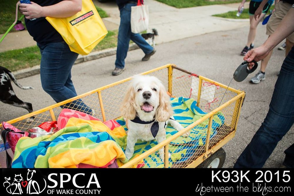 "Keith's dog ""Trooper"", who has since passed away, was unable to participate as a walker, so Keith pulled him in a wagon during the 2015 SPCA of Wake County Dogwalk and Woofstock."