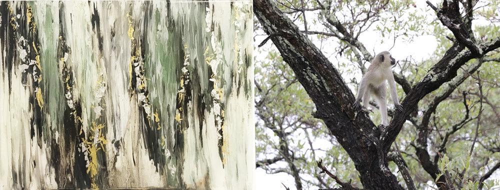 """""""Velvet Branches"""" & The Velvet Monkey /Kruger National Park, South Africa"""