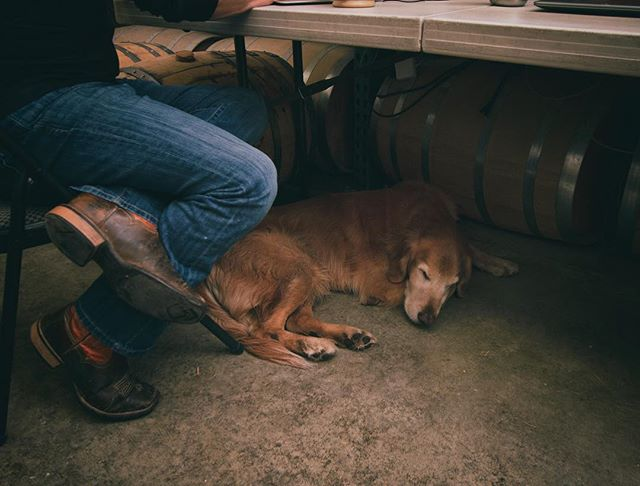 It's been a rough week, almost time for that whiskey drink. _ #ruffweek #jokester #shopdog #relax #2bar #craftwhiskey