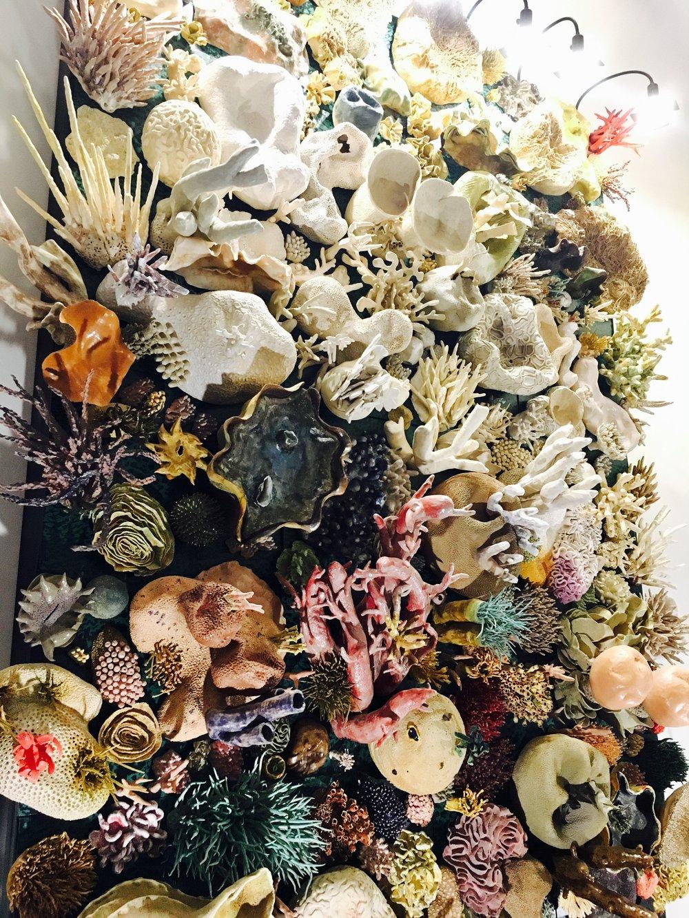 AAAS coral.jpg