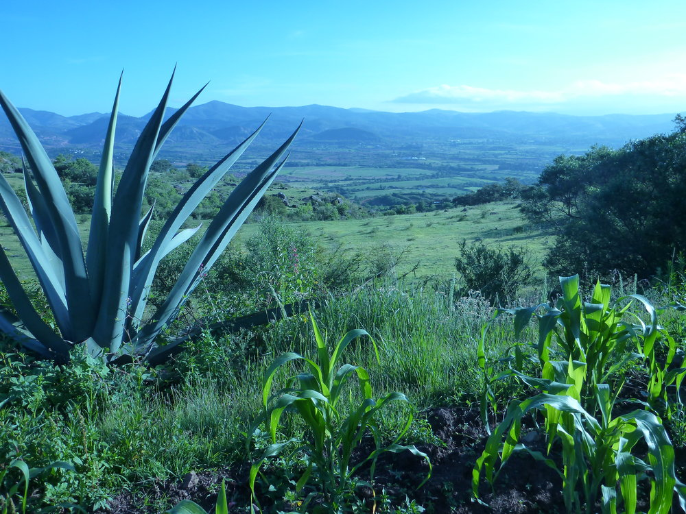 View from a subsistence farmers plots on the hill near Yanhuitlan, Oaxaca State, Mexico
