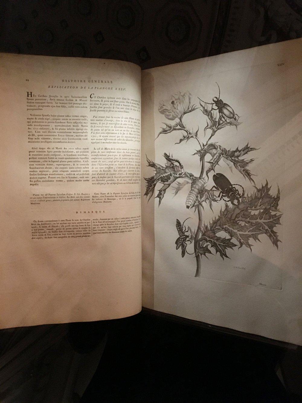 Book illustrations