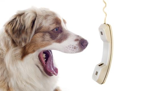 Dog yelling into phone.jpg