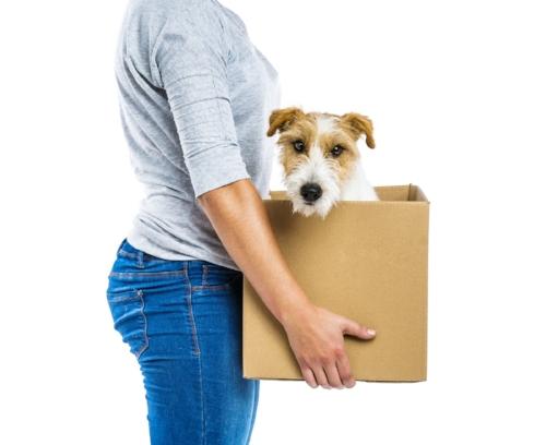 movingdog in box.jpg