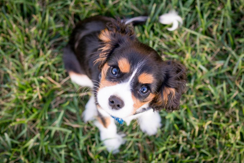 PUPPY SOCIALISATION & DOG TRAINING CLASSES - TORONTO, ONTARIO, CANADA