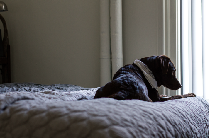 SEPARATION ANXIETY PROGRAM - FOR DOGS WITH HOME-ALONE ISSUES