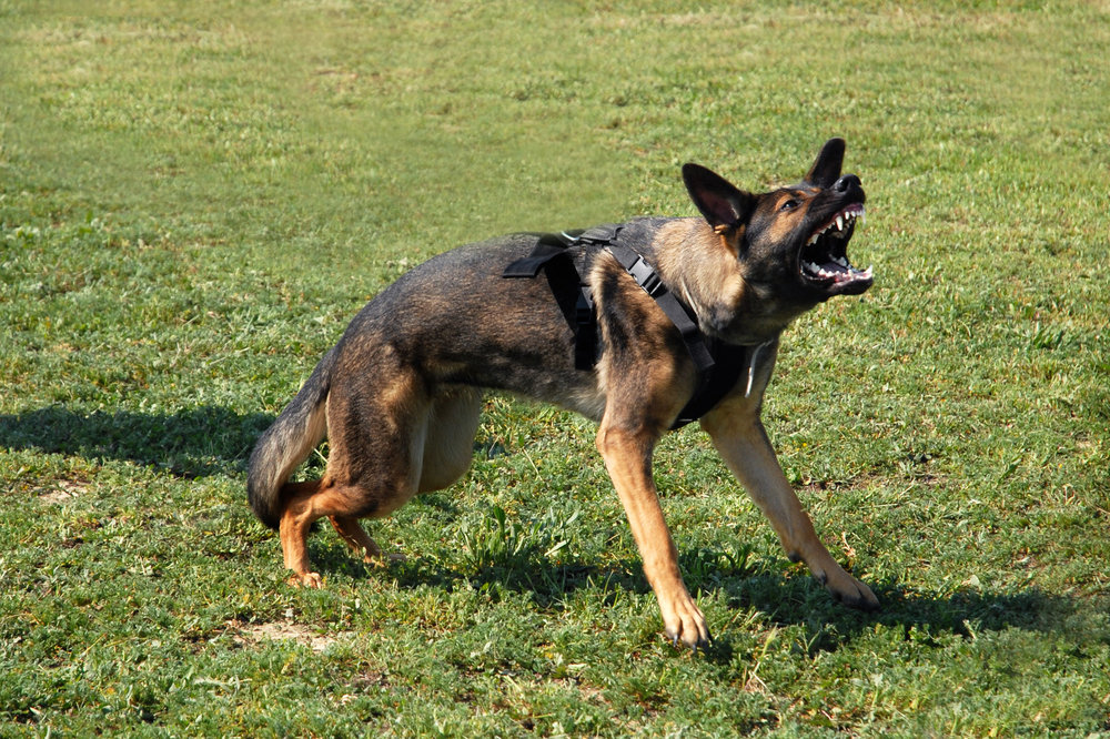 LEASH-REACTIVE DOG PROGRAM - TRAINING & SUPPORT FOR LEASH-REACTIVITY