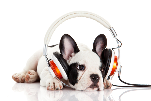Sound Sensitivities & Noise Phobias in Dogs - $39.90 USD